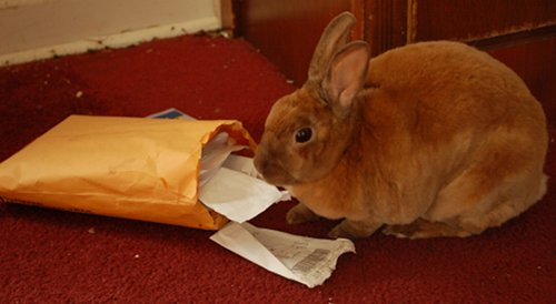 Rabbit eating important receipts