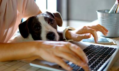 Female hands working from home on a laptop with a cute dog